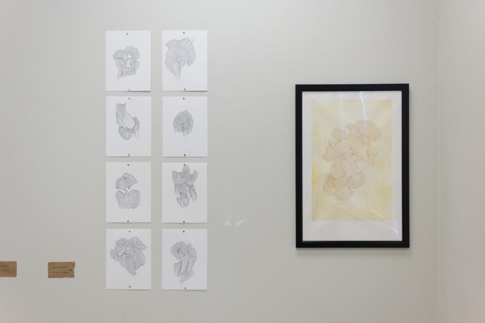 MEDICI Gallery