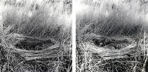 "Amanda Breitbach, ""Refuge,"" gelatin silver photographs, 2014."