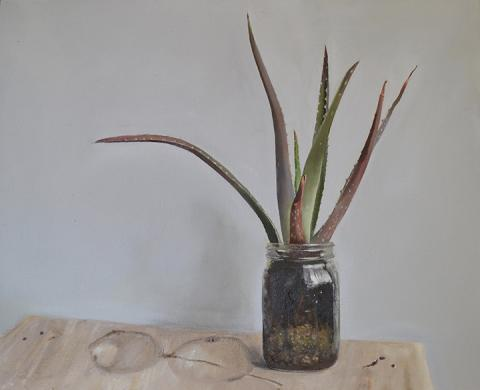 "Phoebe Jan-McMahon, ""Aloe,"" oil on linen, 20"" x 16"", 2018."