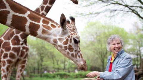 """The Woman Who Loved Giraffes"" is one of the movies available for streaming through The Ross."