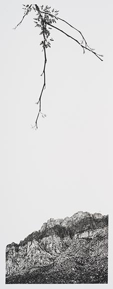 "Dana Fritz, ""Redbud Redrock,"" gelatin silver print, 27.5"" x 15"" (framed), 2016."