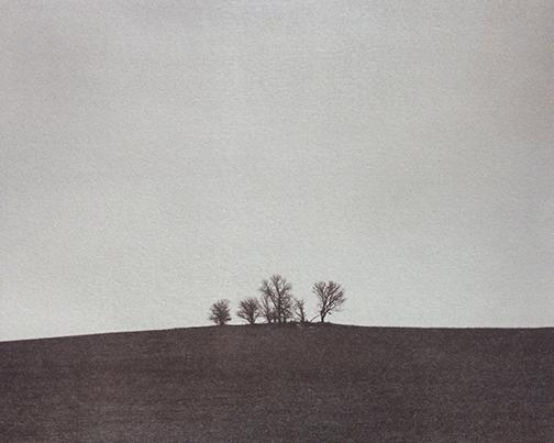 "Alec Kaus, ""Trees #1,"" salt print, 2015."