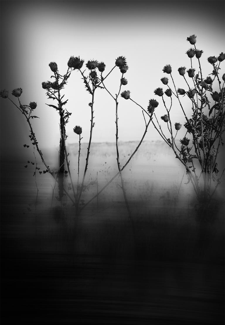"""Prints that will be raffled during the UNL Fine Art Photo Club's Spring Sale include """"The Search 4,"""" an archival digital print by graduate student Allen Morris."""