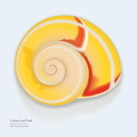 "Zachary Ubbelohde, ""Polymita (Cuban Land Snail)."""