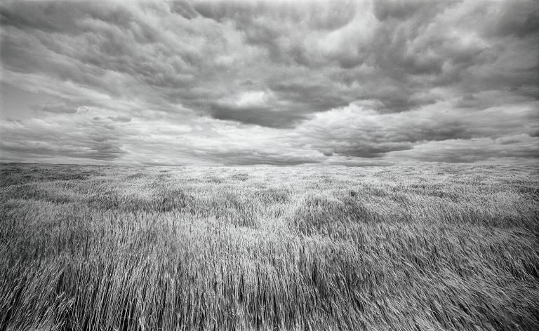 Lawrence McFarland, Kansas-Nebraska Wheatfield, 1976.